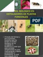 Aecontrol Biologico Defoliadores Forestales