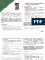 NUTRAFOL FERTILIZANTE FOLIAR CACAO-1-Ver2 - web.pdf