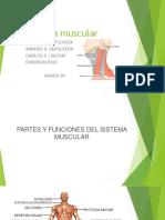 Sistema Muscular - Copia