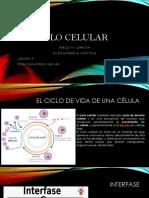 Informe de Biologia Osmosis
