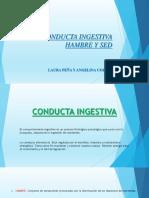 CONDUCTA INGESTIVA DIAPOSITIVA 2.ppt