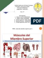 Anatomia musculos superiores