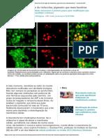 Descoberta Forma de Ação Da Violaceína Pigmento Que Mata Bactérias