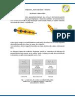 276932535-Informacion-Conductores-Para-Triptico.docx