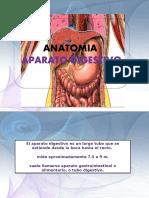 Ap. digest. anatomofisiologia.pptx