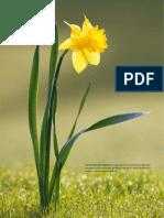 bases moleculares de la floracion.pdf