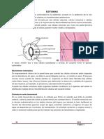 6._tejido_de_protecciÓn_1rio,_estomas.pdf