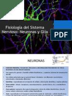 1B- Neuronas y Glia (8!3!19)