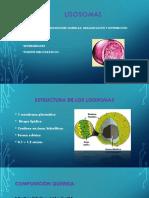 Lisosomas.pptx