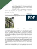 palma africana.docx