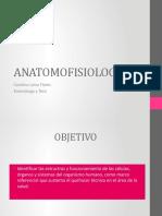 Programa Anatomofisiologia