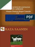 CLASIFICACION DE LAS RAZAS DE CAPRINOS.pptx