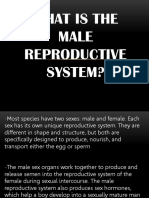 What Is the Male Reproductive System.pptx
