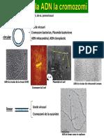 Genetica II_Structura cromozomilor EK.pdf