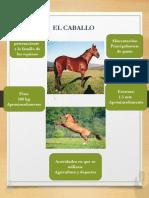 Tabloide el caballo.pptx