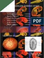 130520_perkembangan Embrio Ayam (Contoh)
