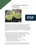 Concentración de nutrientes en planta como herramienta de diagnóstico.docx