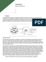Comunidad participante Anderson clase 2 para prueba (2).docx
