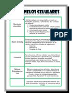 ORGANELOS CELULARES.docx