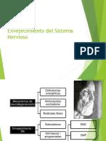 envejecimiento del sistema nervioso