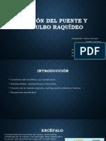 presentacion de anatomia.pptx