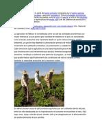 IMPORTANCIA DEL SECTOR AGROPECUARIO.docx