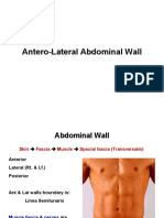 Anatomy, Lecture 8, Antero-Lateral Abdominal Wall (Slides)