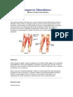 Desgarros Musculares