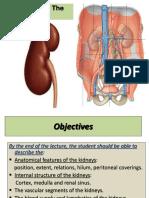 01-Anatomy of Kidney(1)