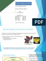 Ciclo del Azufre.pptx