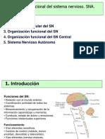 Organización Funcional Del SN