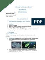 Patrones morfologicos de los animales.docx