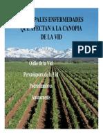 Variedades de Vid en Argentina