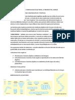 RESUMEN DE TAXONOMIA Y MORFOLOGIA DE BACTERIAS.docx