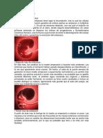 9 MESES DE EMBARAZO.docx