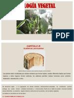Tema 3 Tejido de Las Plantas