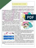 Empatía, Neuronas Espejo y Autismo 2012(2)
