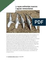 Tiburones y rayas enfrentan nuevos peligros en aguas venezolanas.docx