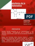4-adrenalina.pptx