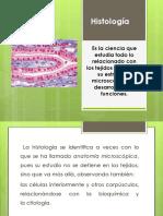 exposicintejidoepitelial-130112121118-phpapp02