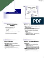 02 - Anatomia do Sistema Genital.pdf