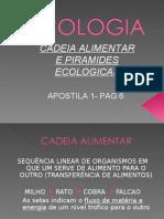 Biologia PPT - Aula 2 - Piramides Ecológicas
