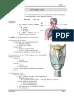 Anatomia Repaso