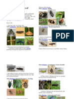 Overview of Orders of Insects.docx