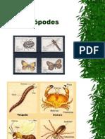 Biologia PPT - Aula 5 - Artrópodes