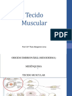 Tecido Muscular THAIS