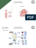Taller Embriologia