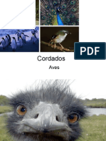 Biologia PPT - Aula 10 - Aves