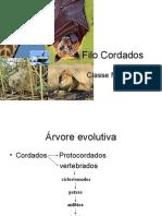 Biologia PPT - Aula 11 - Mamiferos