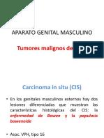 APARATO GENITAL MASCULINO (1).pdf